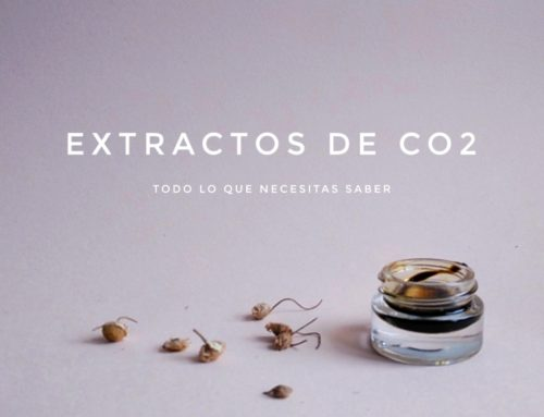 Extractos de CO2 supercrítico… ¿por qué molan tanto?